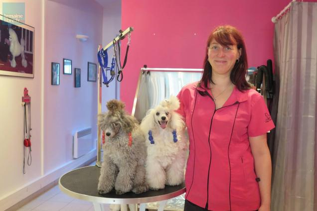 Dog Grooming Courses Plymouth