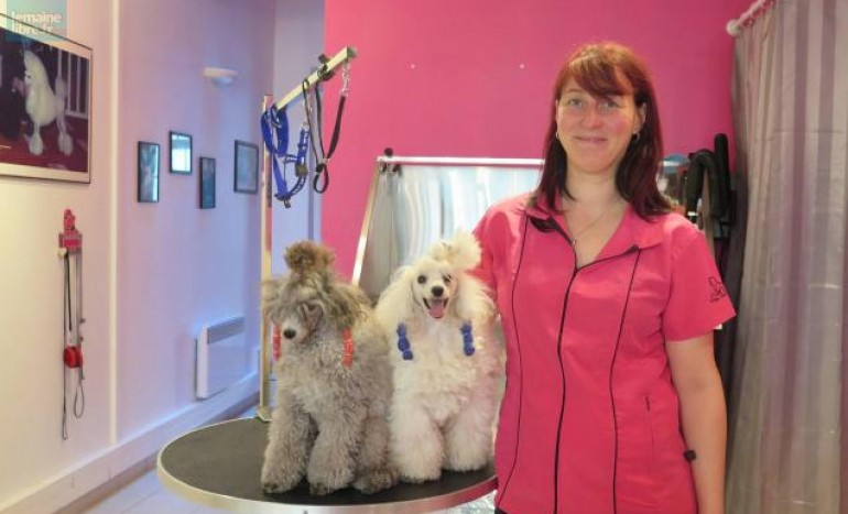 Ocn Level 3 Professional Dog Grooming Course Uk Grooming Courses