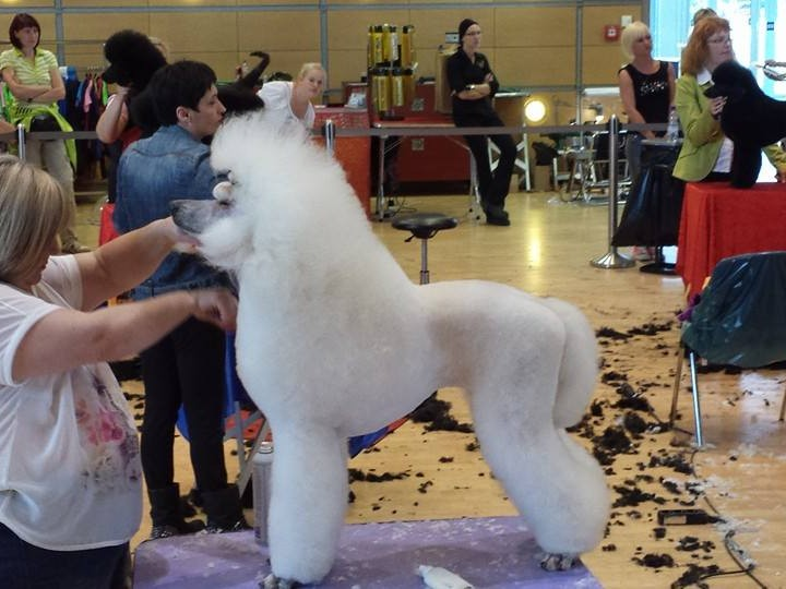 Dog Grooming City And Guilds Courses East Sussex