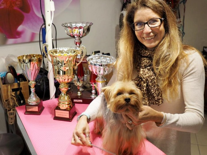 Dog Grooming Courses Midlands Uk Grooming Courses