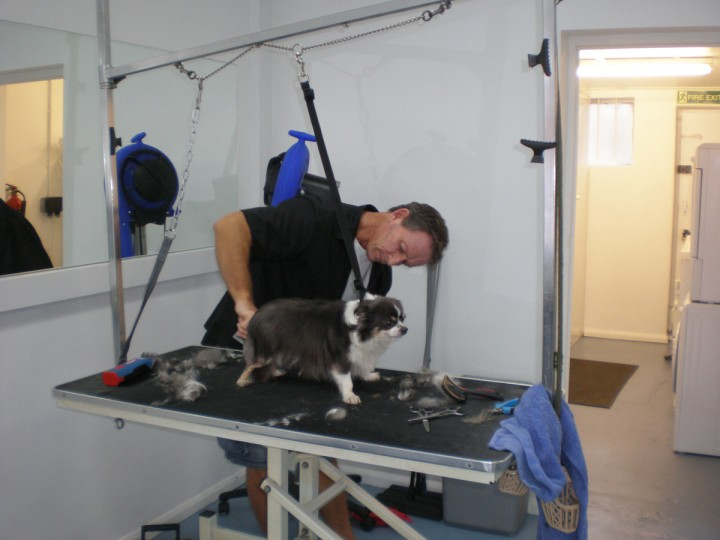 Professional Dog Grooming Uk Grooming Courses