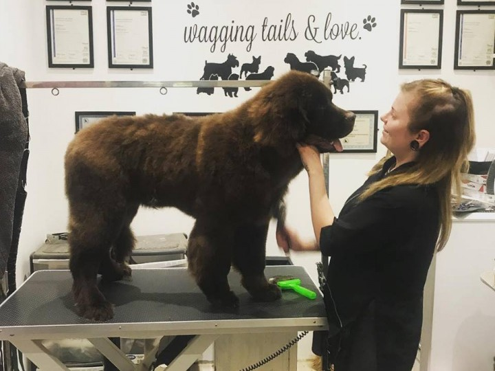 Dog Grooming Courses Essex