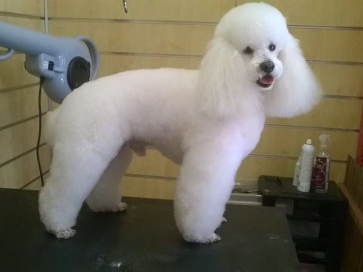 Dog Grooming Courses East Sussex Uk Grooming Courses
