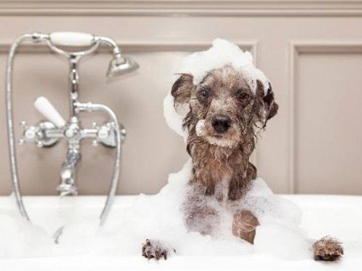How To Choose The Right Dog Grooming Course For You Uk Grooming